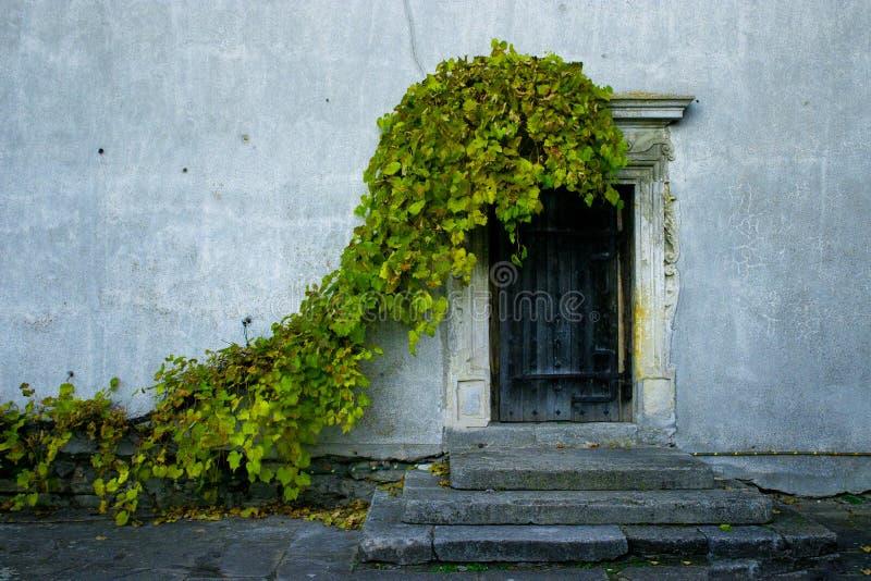 Πόρτα που καλύπτεται υπέροχα από τον κισσό, Ουκρανία στοκ εικόνες με δικαίωμα ελεύθερης χρήσης