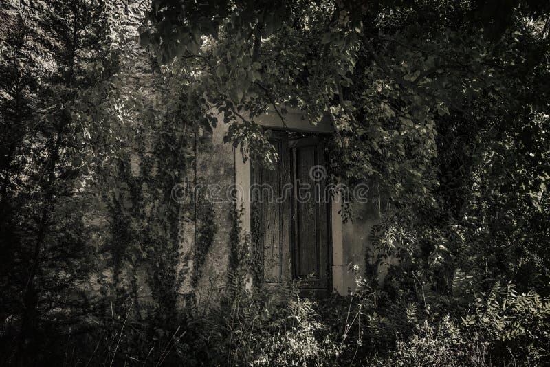 Πόρτα στα ξύλα στοκ φωτογραφία με δικαίωμα ελεύθερης χρήσης