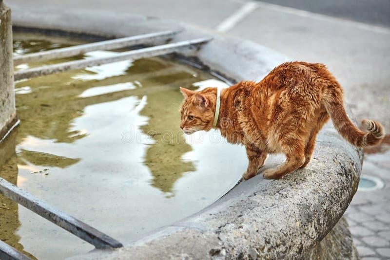 Πόσιμο νερό γατών από μια παλαιά πηγή πετρών στοκ εικόνες