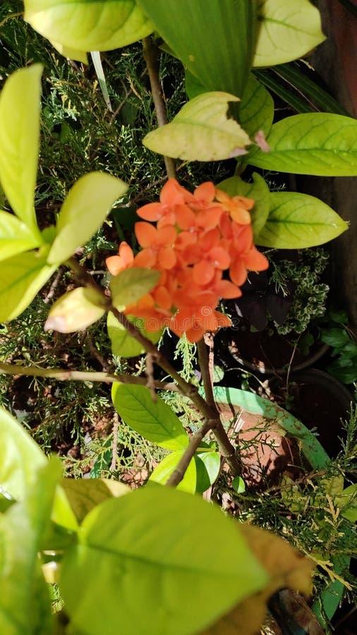 Πόσο όμορφη η γη είναι με τα λουλούδια και σας ευχαριστεί έτσι don& x27 το τ χάνει οποιαδήποτε σχετικά χαρακτηριστικά γνωρίσματα  στοκ εικόνα