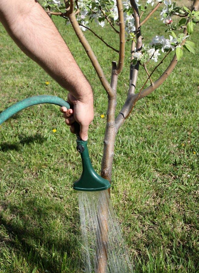 πότισμα δέντρων στοκ εικόνες με δικαίωμα ελεύθερης χρήσης