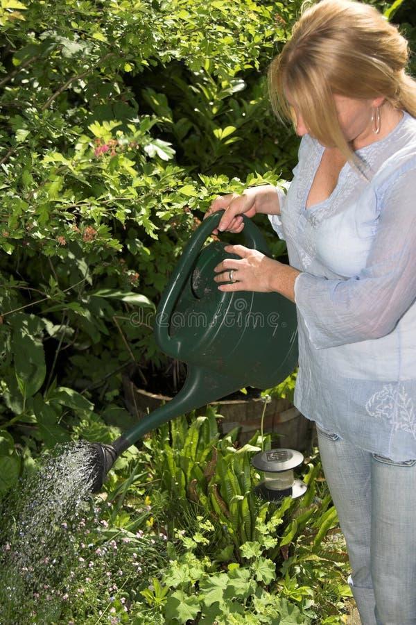 πότισμα φυτών στοκ φωτογραφία
