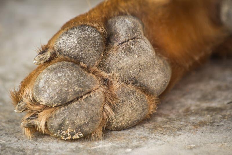 Πόδια και πόδια σκυλιών στοκ φωτογραφία