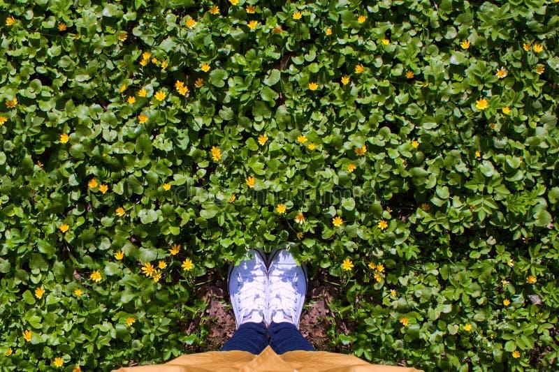 Πόδια και χλόη στοκ εικόνες με δικαίωμα ελεύθερης χρήσης