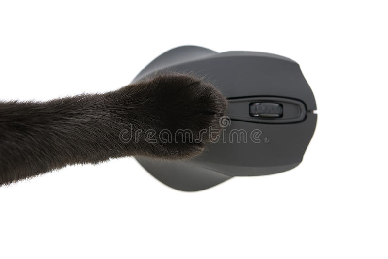 Πόδι γατών που χρησιμοποιεί ένα ποντίκι υπολογιστών στοκ εικόνα
