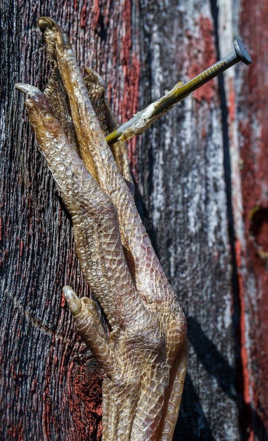 Πόδι πουλιού στοκ φωτογραφίες με δικαίωμα ελεύθερης χρήσης