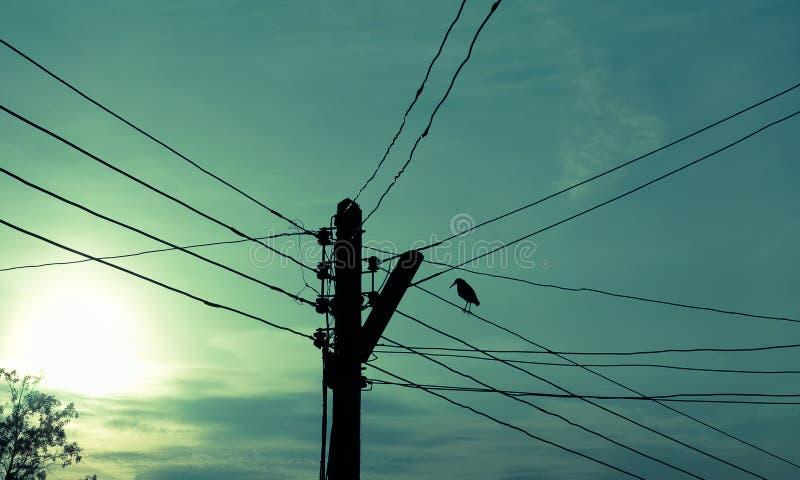 Πόλος και πουλί ηλεκτρικής ενέργειας στοκ φωτογραφίες