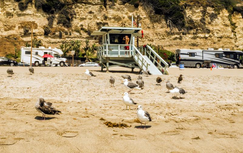 Πύργος Lifeguard παραλιών της Βενετίας με πολλά seagulls στο 13ο του Αυγούστου του 2017 - παραλία της Βενετίας, Λος Άντζελες, Λα, στοκ φωτογραφία με δικαίωμα ελεύθερης χρήσης