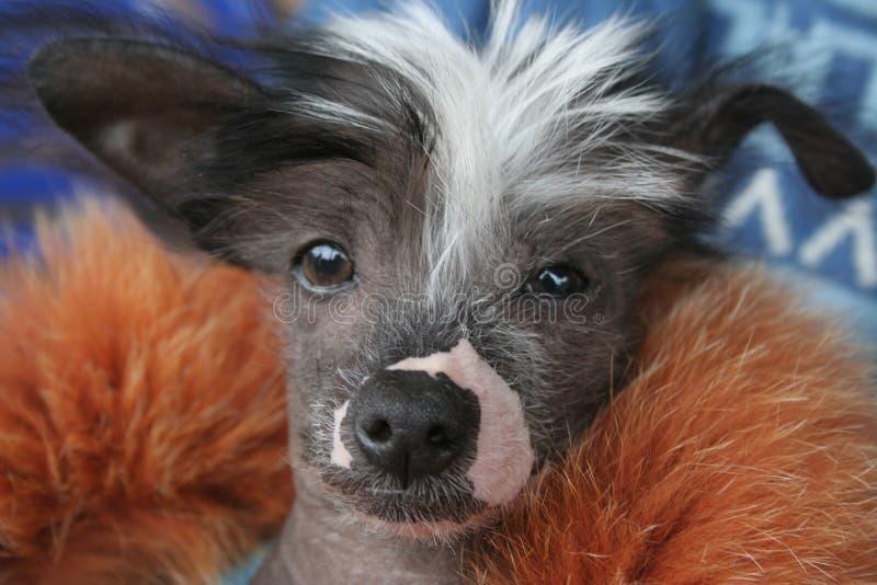 πώληση σκυλιών στοκ εικόνες
