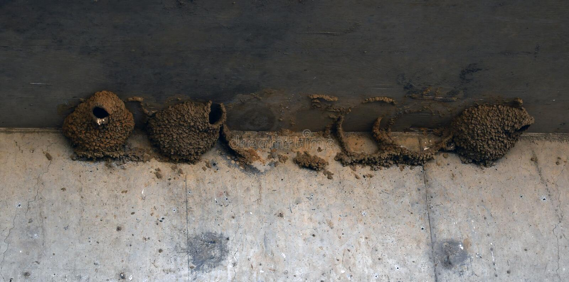 Πώς οι φωλιές πουλιών ανατρέχουν στενές στοκ φωτογραφία