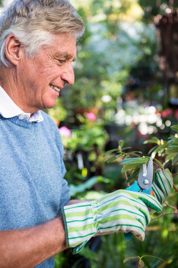 Πλάγια όψη των ευτυχών κλαδίσκων περικοπής κηπουρών στον κήπο στοκ φωτογραφία