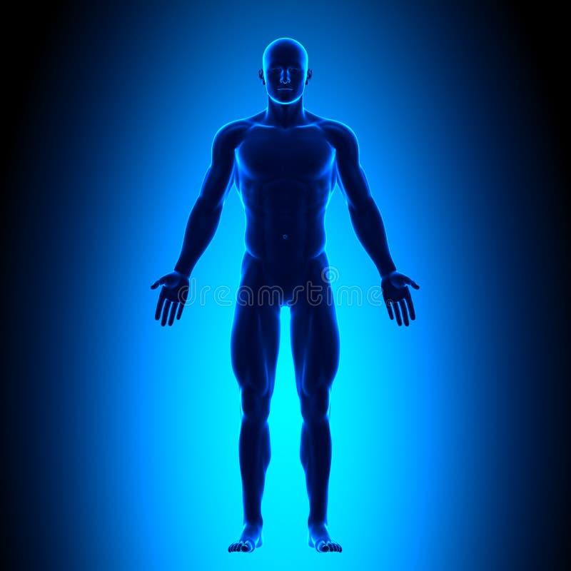 Πλήρες σώμα - μπροστινή άποψη - μπλε έννοια ελεύθερη απεικόνιση δικαιώματος
