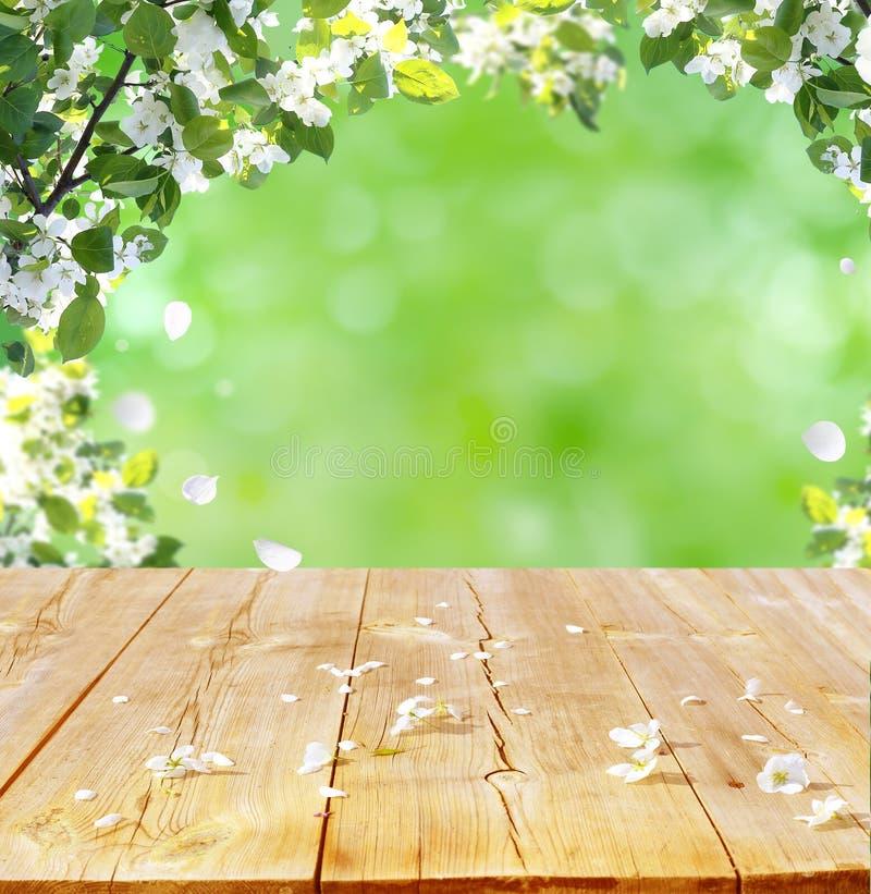 πλήρης άνοιξη λιβαδιών πικραλίδων ανασκόπησης κίτρινη στοκ εικόνα με δικαίωμα ελεύθερης χρήσης