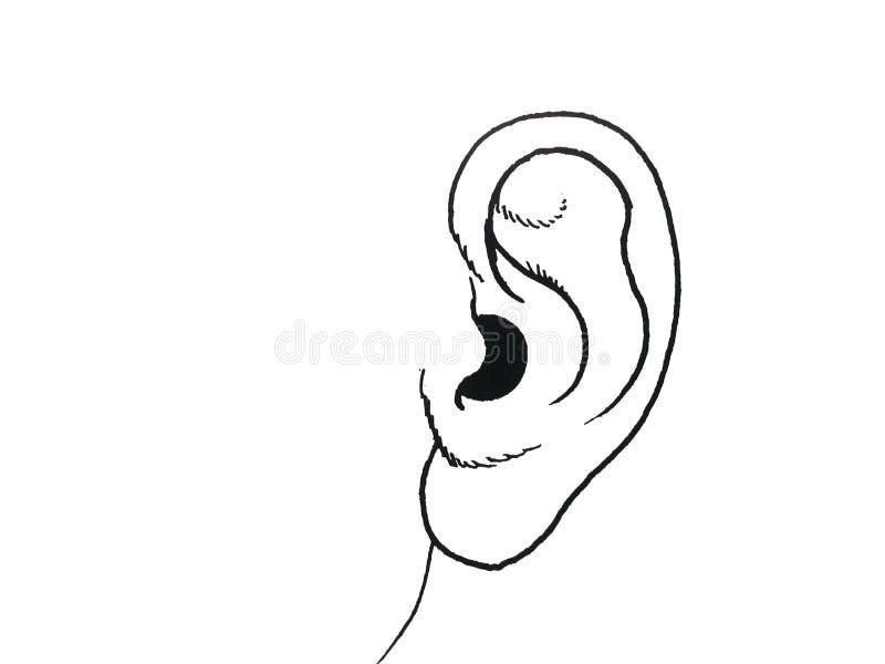 Πλήρης απεικόνιση αυτιών μερών ανθρώπινου σώματος ελεύθερη απεικόνιση δικαιώματος