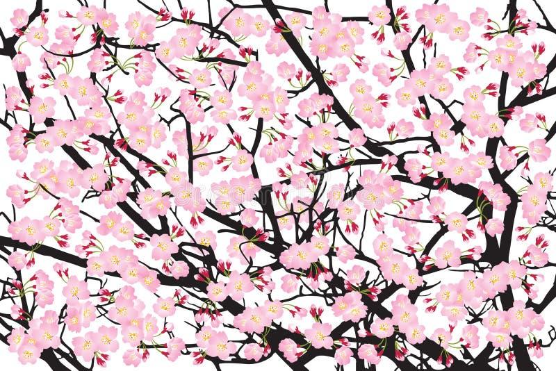 Πλήρους άνθισης ρόδινο sakura δέντρων κερασιών σκηνικό φλοιών ανθών μαύρο ξύλινο ελεύθερη απεικόνιση δικαιώματος