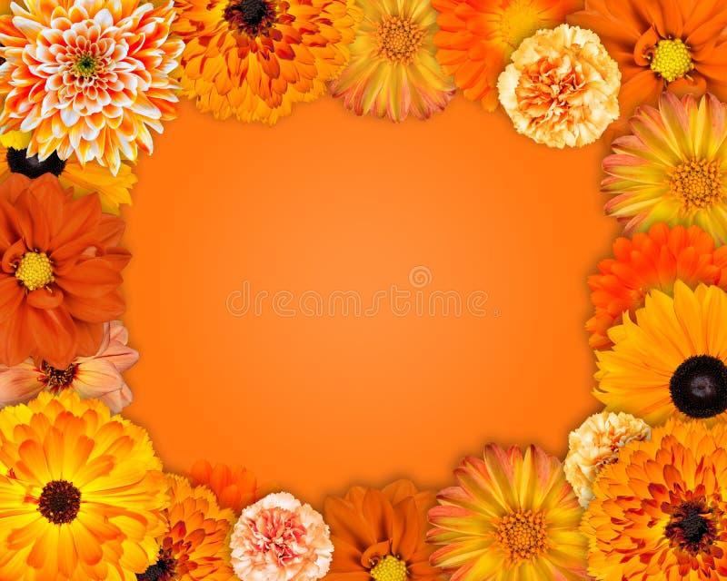 Πλαίσιο λουλουδιών με τα πορτοκαλιά λουλούδια στοκ εικόνες