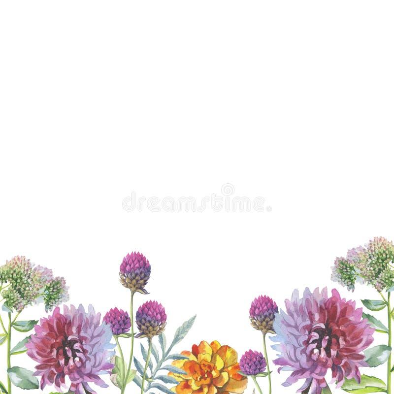 Πλαίσιο λουλουδιών χρυσάνθεμων Wildflower σε ένα ύφος watercolor που απομονώνεται απεικόνιση αποθεμάτων