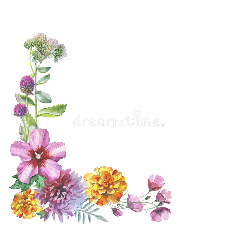 Πλαίσιο λουλουδιών χρυσάνθεμων Wildflower σε ένα ύφος watercolor που απομονώνεται ελεύθερη απεικόνιση δικαιώματος