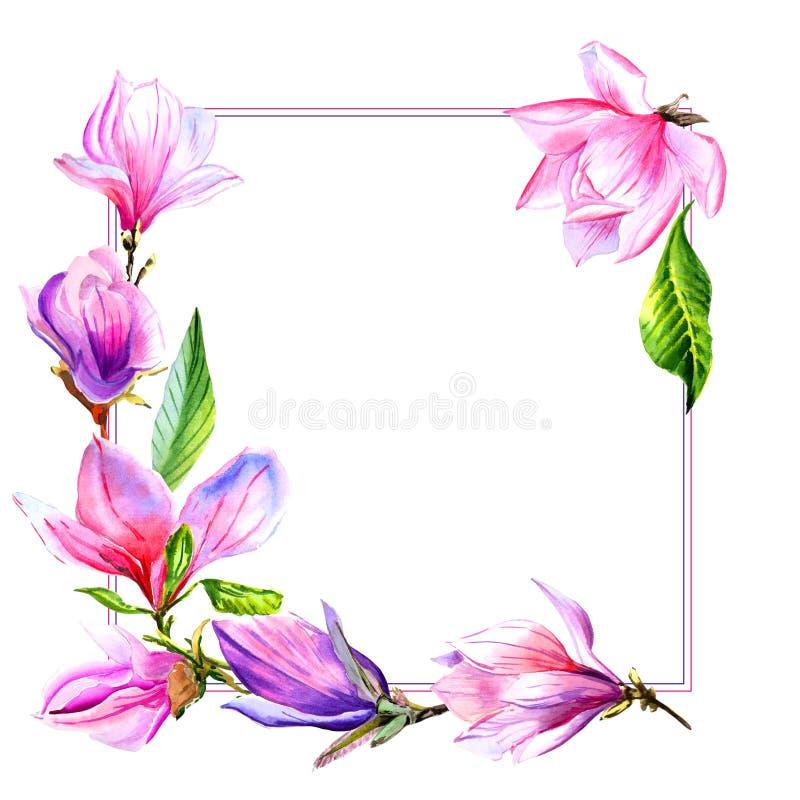 Πλαίσιο λουλουδιών magnolia Wildflower σε ένα ύφος watercolor που απομονώνεται απεικόνιση αποθεμάτων