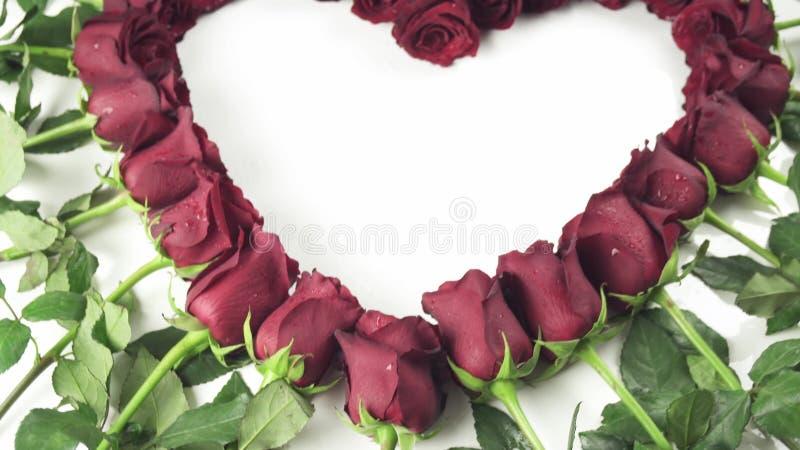 Πλαίσιο στην καρδιά μορφής των κόκκινων τριαντάφυλλων με τα σταγονίδια νερού σε ένα άσπρο βίντεο μήκους σε πόδηα αποθεμάτων υποβά απόθεμα βίντεο