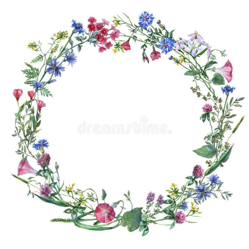 Πλαίσιο συνόρων στεφανιών με τα θερινά χορτάρια, λουλούδια λιβαδιών απεικόνιση αποθεμάτων