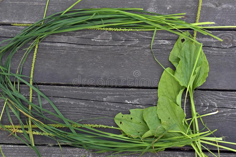 Πλαίσιο της χλόης και plantain στοκ εικόνα με δικαίωμα ελεύθερης χρήσης