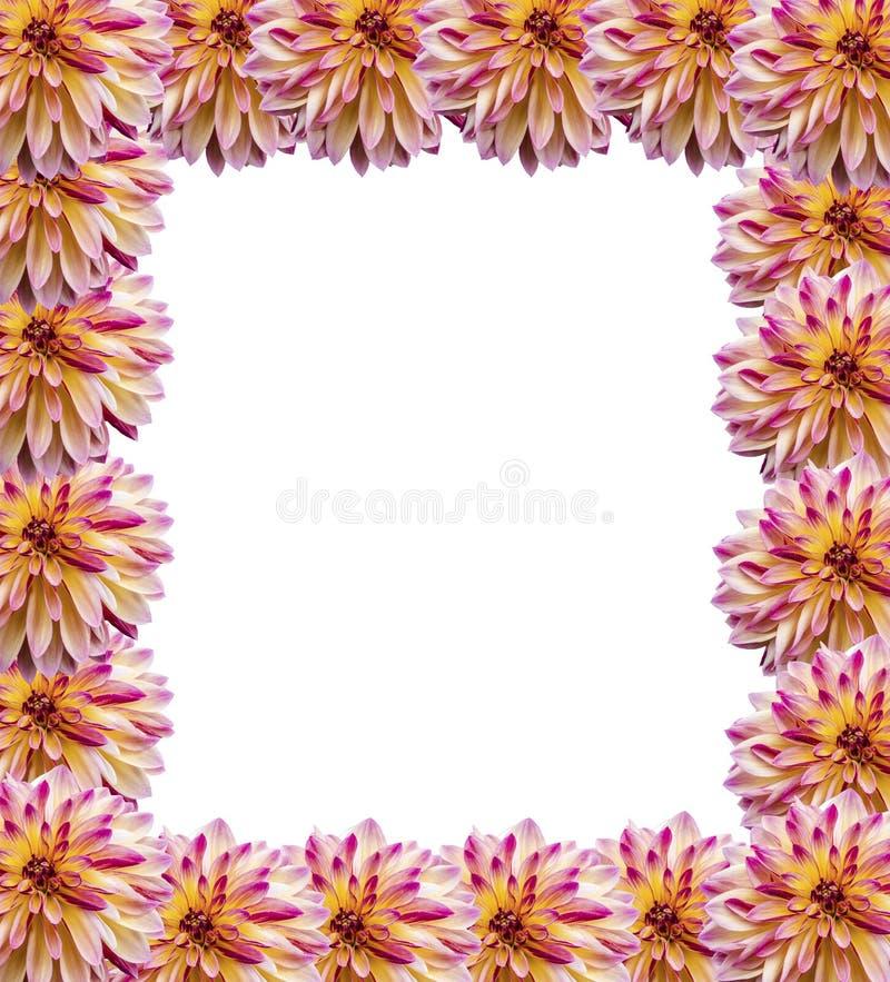 Πλαίσιο των νταλιών λουλουδιών στοκ εικόνες