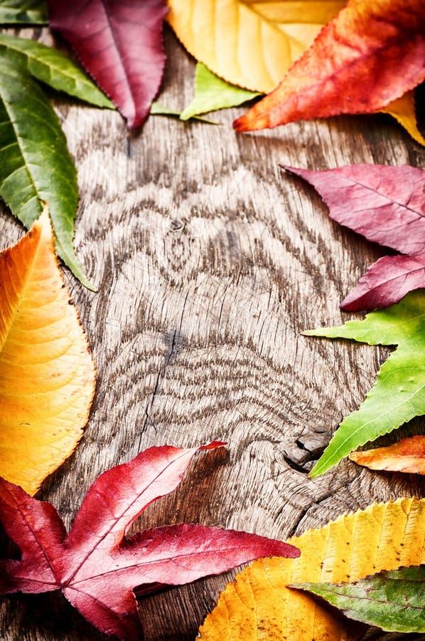 Πλαίσιο φθινοπώρου με τα ζωηρόχρωμα φύλλα δέντρων στοκ φωτογραφίες