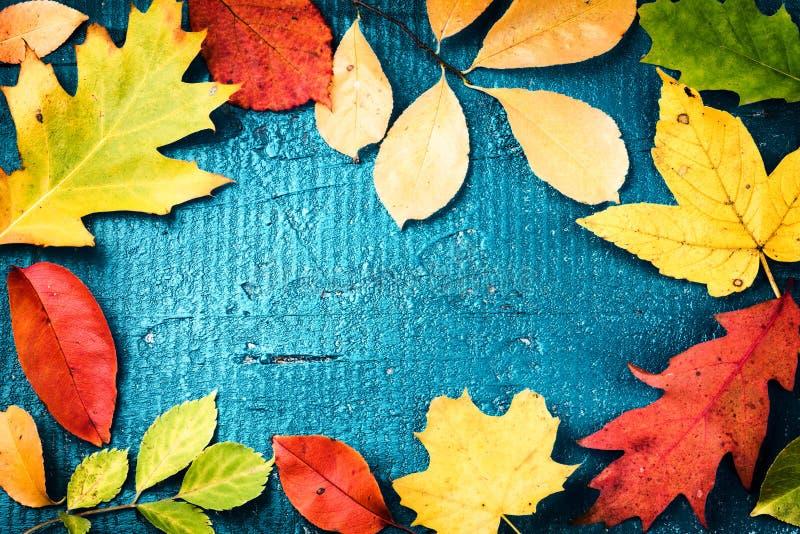 Πλαίσιο φθινοπώρου με τα διάφορα ζωηρόχρωμα φύλλα πτώσης πέρα από μπλε ξύλινο στοκ εικόνες