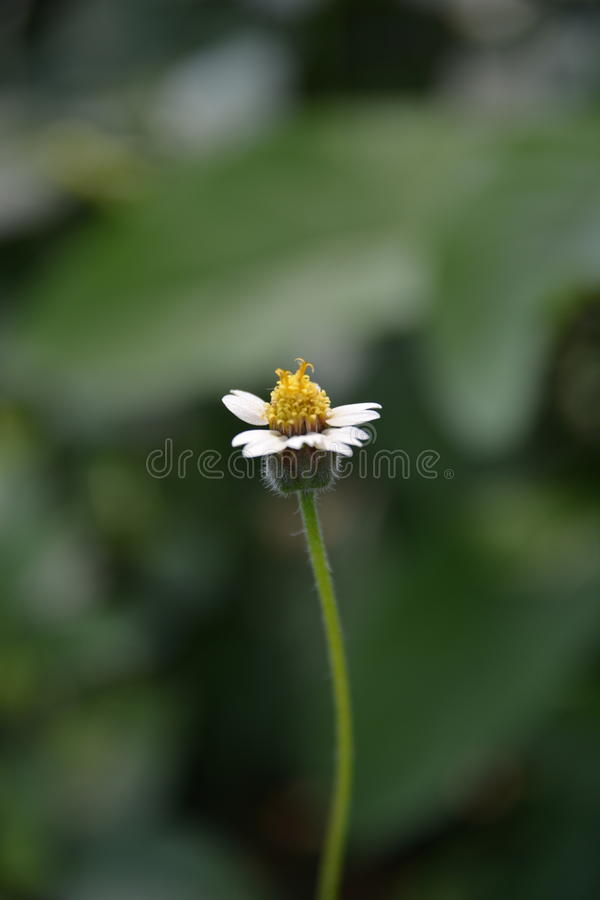 Πλευρά λουλουδιών στοκ φωτογραφίες με δικαίωμα ελεύθερης χρήσης