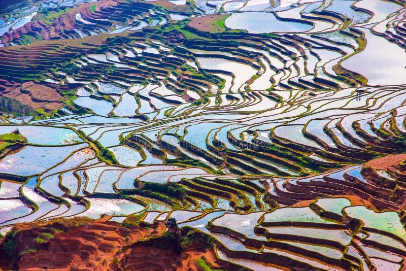 Πλημμυρισμένοι τομείς ρυζιού στη Νότια Κίνα στοκ εικόνα