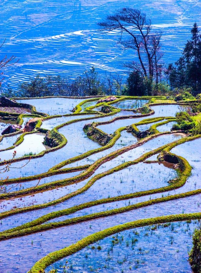 Πλημμυρισμένοι τομείς ρυζιού στη Νότια Κίνα στοκ φωτογραφία