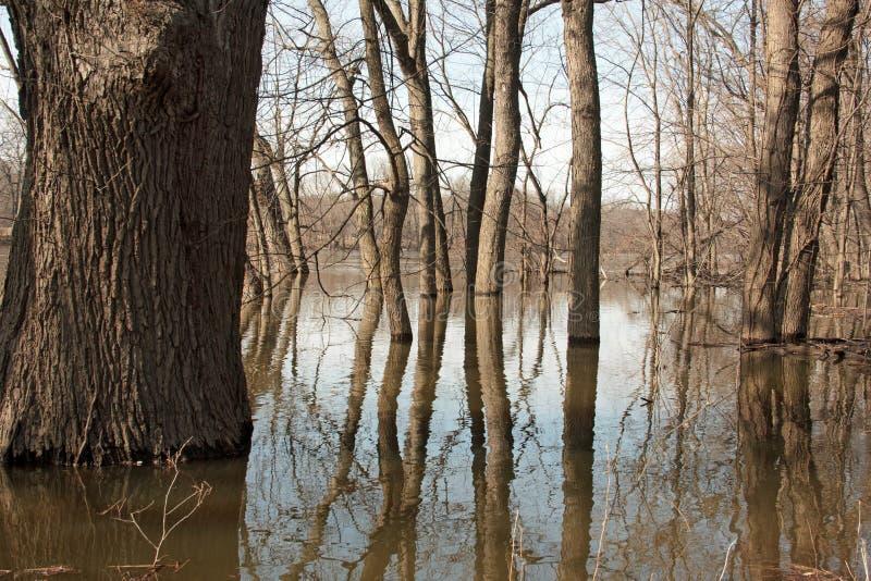 Πλημμυρισμένος ποταμός στοκ φωτογραφία με δικαίωμα ελεύθερης χρήσης