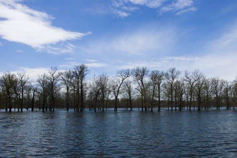 Πλημμύρα άνοιξη στοκ εικόνα