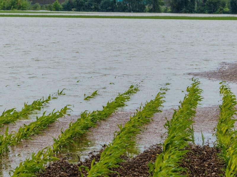 Πλημμύρα 2013 στοκ φωτογραφία με δικαίωμα ελεύθερης χρήσης