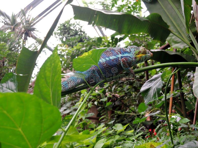 Πλούσιος ζωολογικός κήπος ZÃ ¼ στοκ φωτογραφίες
