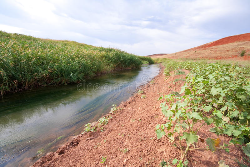 ρέοντας αλσύλλια ποταμών &k στοκ φωτογραφίες