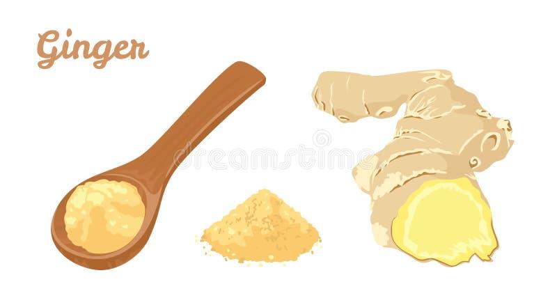 Ρίζα και σκόνη πιπεροριζών στο ξύλινο κουτάλι διανυσματική απεικόνιση