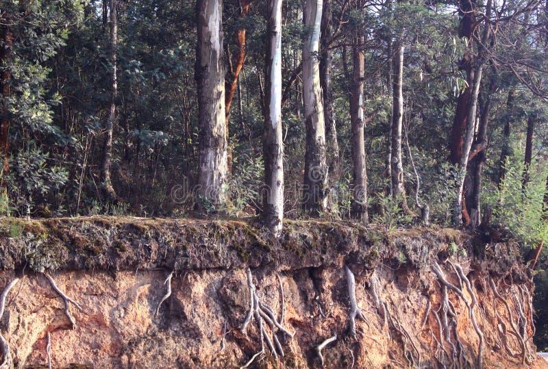 Ρίζες δέντρων Hill στοκ εικόνα με δικαίωμα ελεύθερης χρήσης