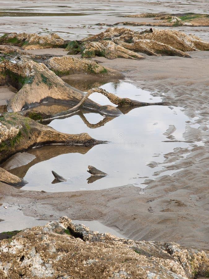 Ρίζες δέντρων που εκτίθενται στην αμμώδη ωκεάνια παραλία στοκ εικόνα