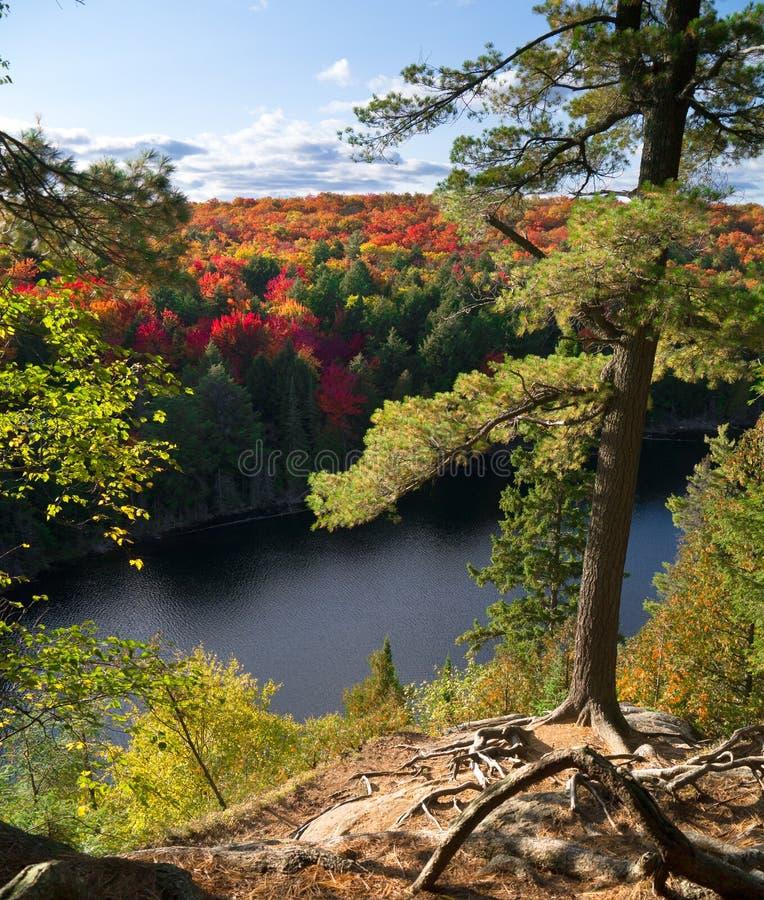 Ρίζες δέντρων στον απότομο βράχο με δασικό Algonquin φθινοπώρου στοκ φωτογραφία με δικαίωμα ελεύθερης χρήσης