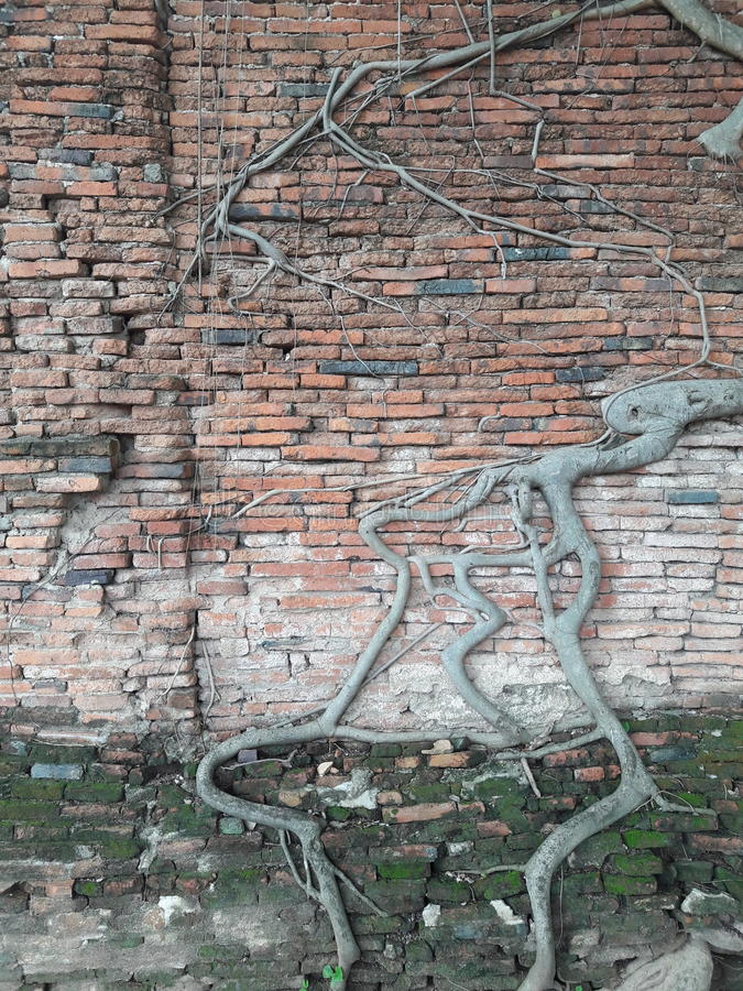 Ρίζες στον τοίχο στοκ φωτογραφία με δικαίωμα ελεύθερης χρήσης