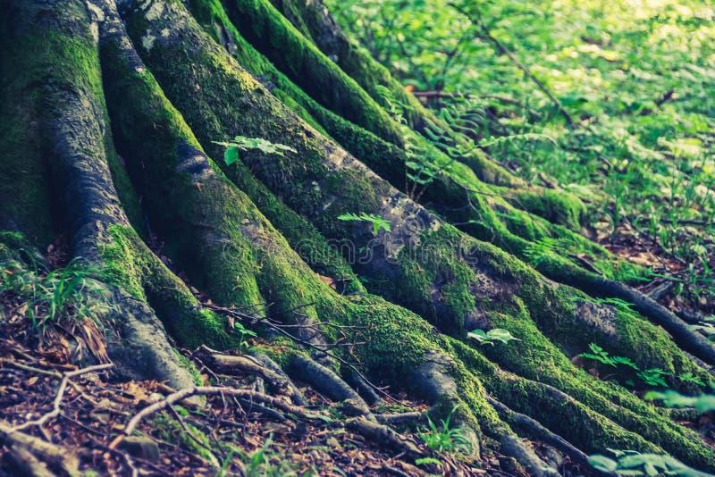 Ρίζες της κινηματογράφησης σε πρώτο πλάνο δέντρων στοκ εικόνες με δικαίωμα ελεύθερης χρήσης