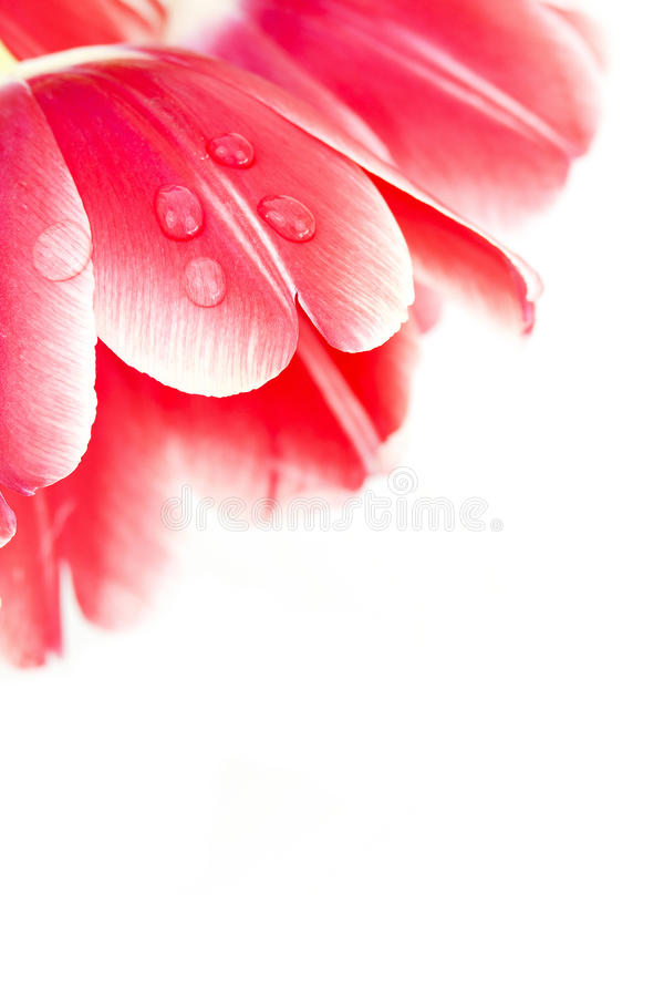 ρίξτε το κόκκινο ύδωρ του&lam στοκ φωτογραφίες