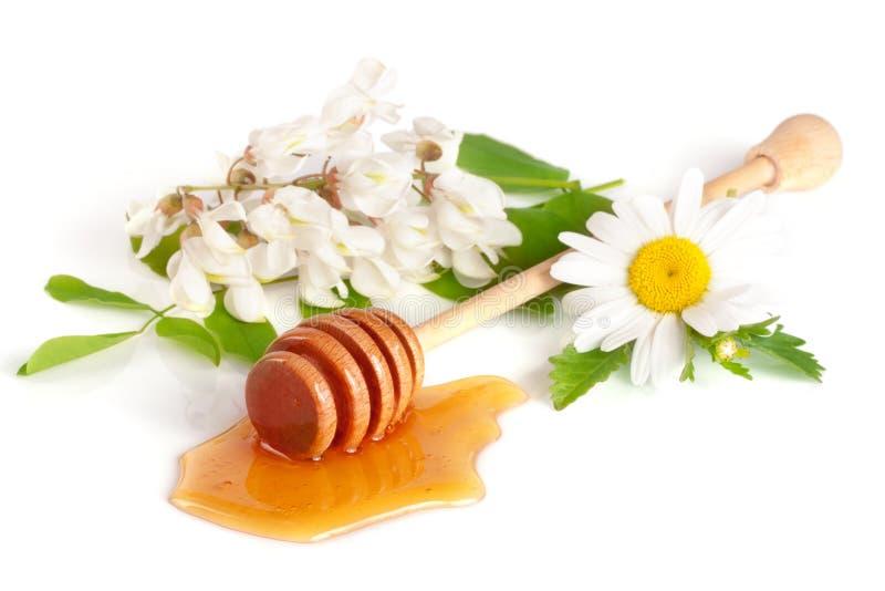 Ραβδί μελιού με το ρέοντας μέλι και τα λουλούδια της ακακίας chamomile που απομονώνει στο άσπρο υπόβαθρο στοκ φωτογραφία με δικαίωμα ελεύθερης χρήσης