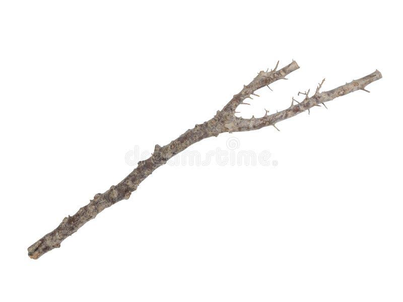 Ραβδί που απομονώνεται ξύλινο στο λευκό στοκ φωτογραφία