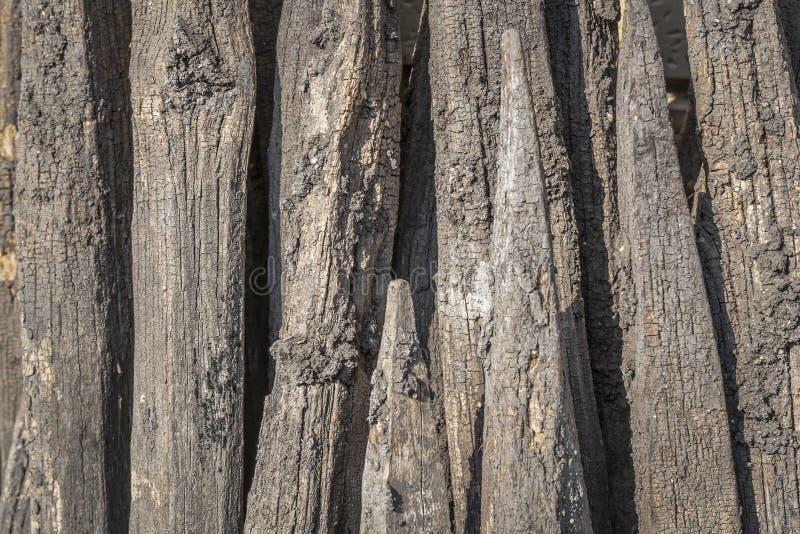 Ραγδαία αναπτυσσόμενος από τον κήπο που ταξινομείται κατ' ευθείαν στοκ εικόνες