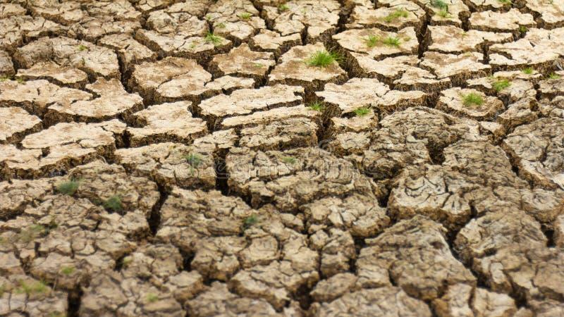 Ραγισμένη εδαφολογική ξηρά χλόη στοκ εικόνες με δικαίωμα ελεύθερης χρήσης