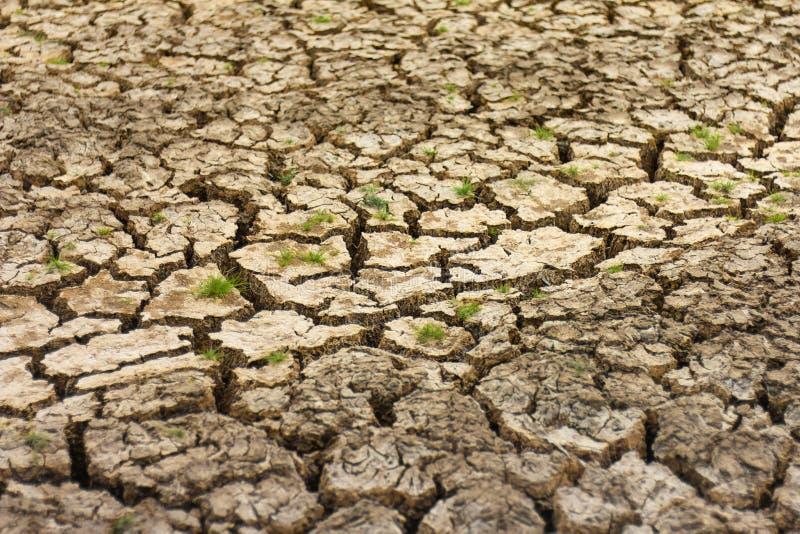 Ραγισμένη εδαφολογική ξηρά χλόη στοκ εικόνα