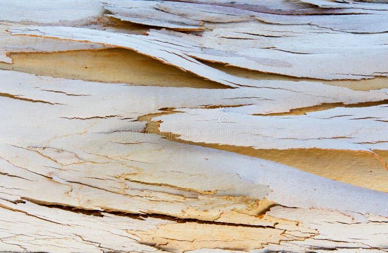 Ραγισμένη και σύσταση φλοιών δέντρων αποφλοίωσης στοκ φωτογραφίες